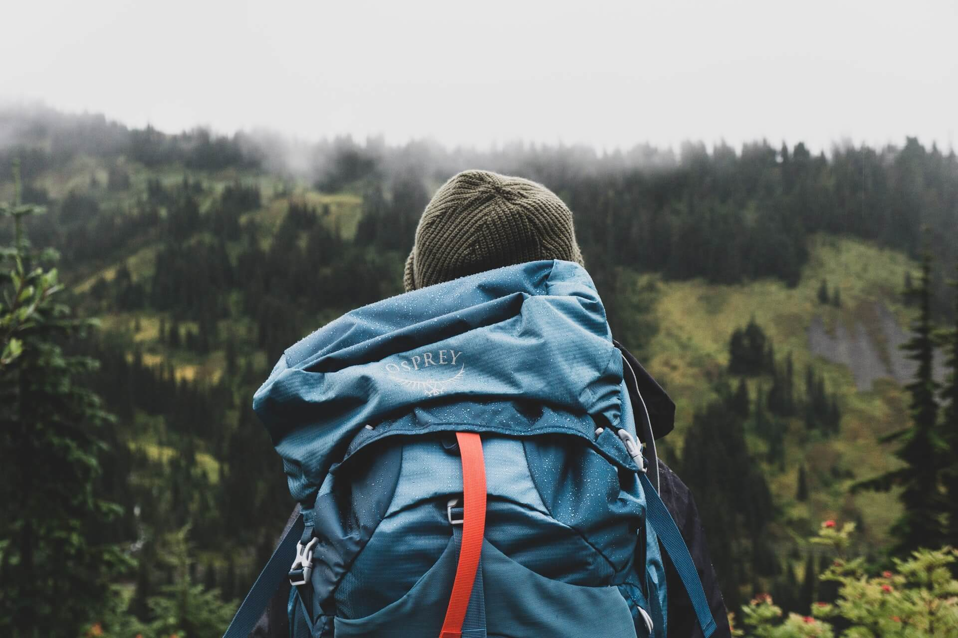 Backpacker shown from behind in a misty forest.