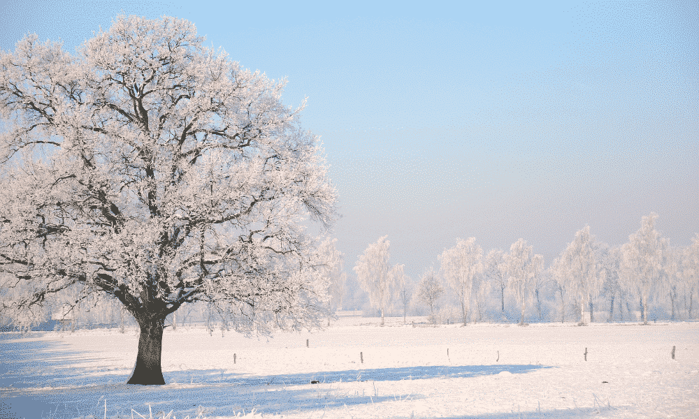 A snowy field in winter